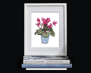 Print of a pink cyclamens in small blue and white pot
