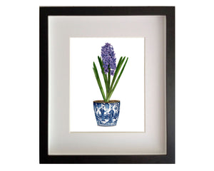 Print of blue / purple hyacinth in gorgeous blue and white antique pot
