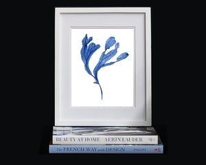 Print of seaweed in blue II