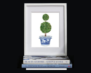 Print of double ball topiary tree in blue and white pot