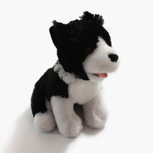 Border Collie Sheep Dog