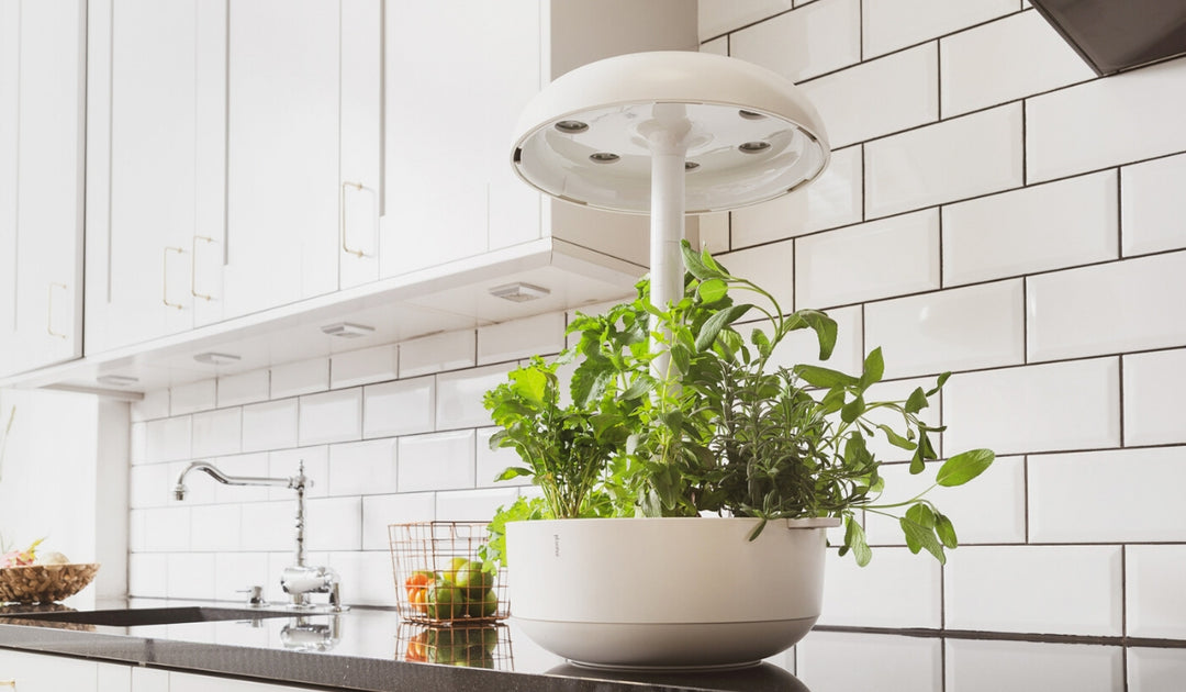 Setting up your Smart Garden