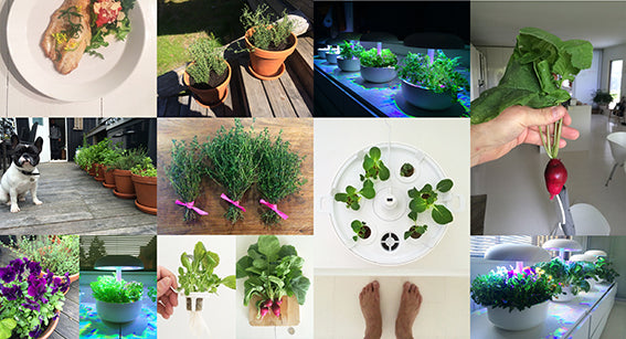 Experimenting with 5 Smart Gardens
