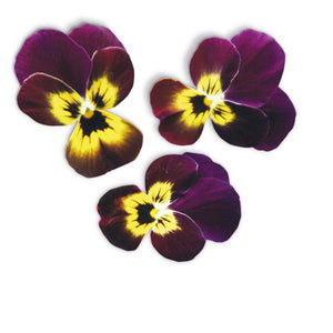 Viola Ruby Gold Flower Garden