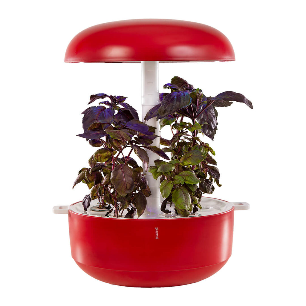 Basil Dark Herb Smart Garden Device