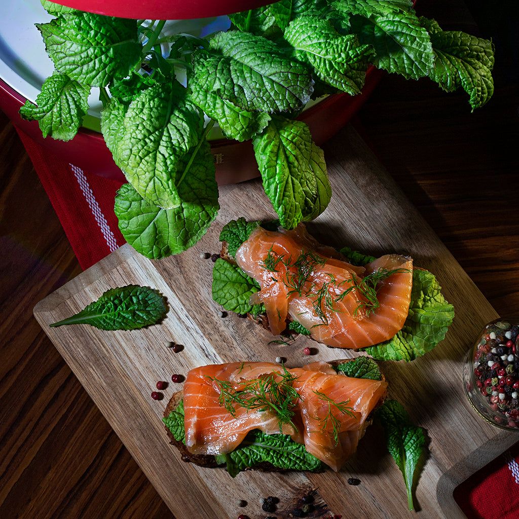 Mustard Red Giant Salad Garden Salmon Recipe