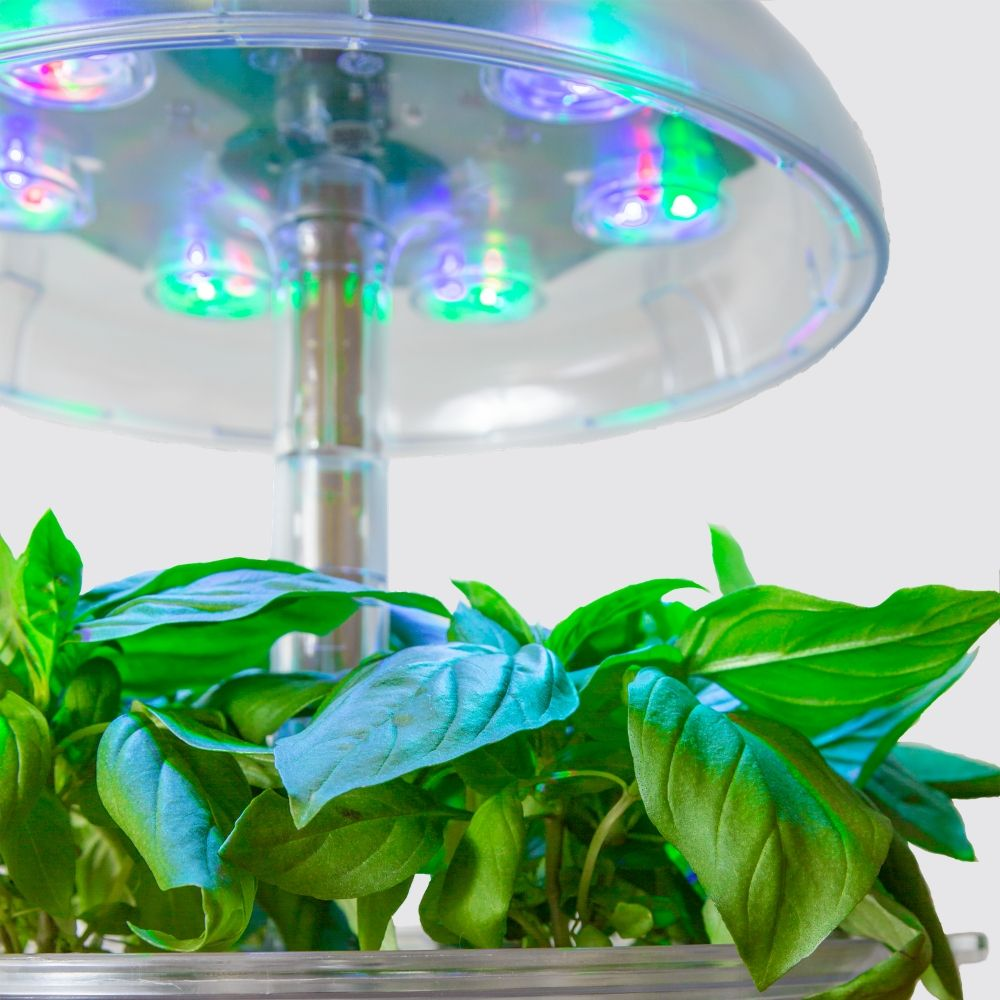 Naked Smart Garden 6 - Limited Edition