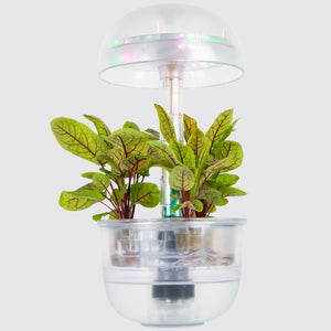 Naked Smart Garden 3 - Limited Edition