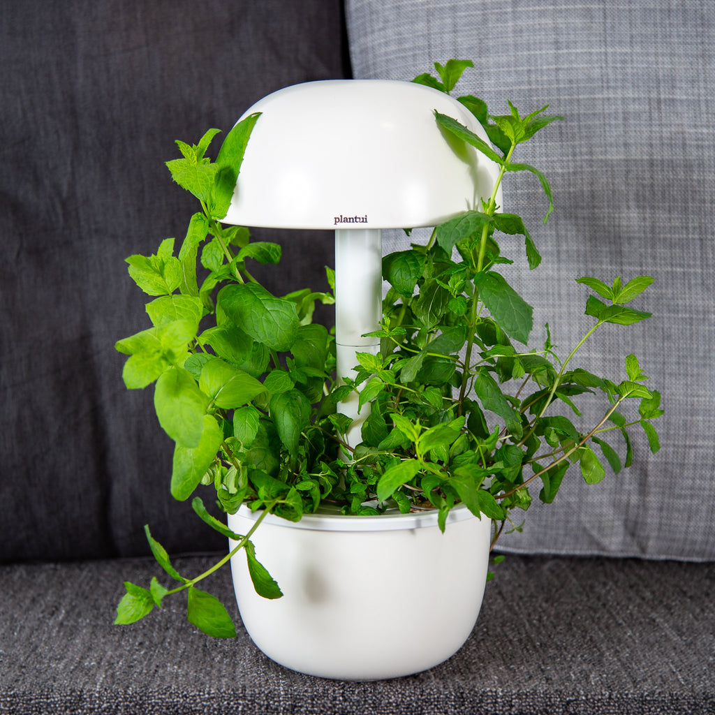 Plantui 3e Smart Garden Mint Lifestyle