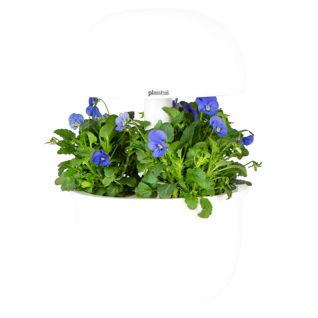 Plantui 3e Smart Garden Viola True Blue