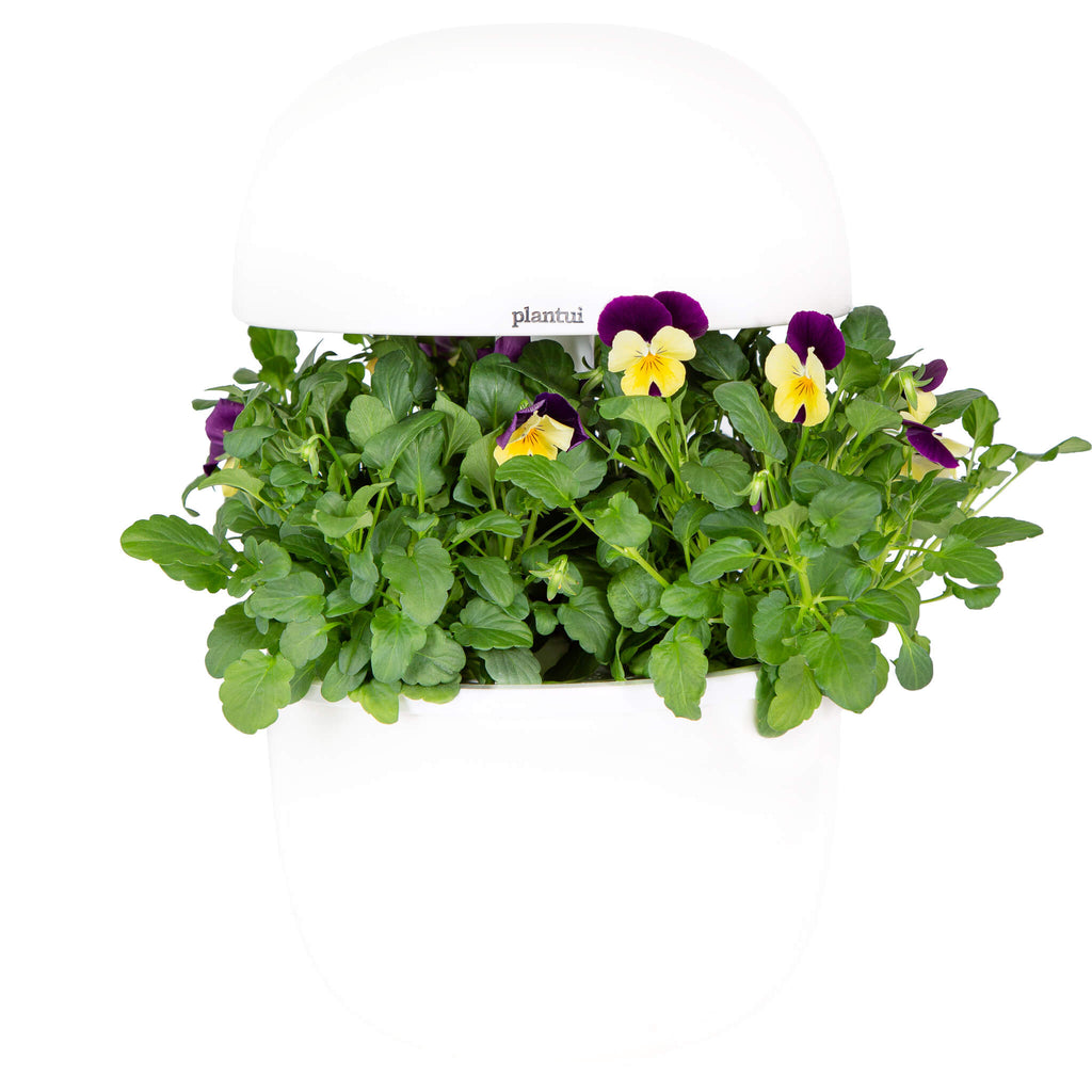 Plantui 3e Smart Garden Viola Yellow Jump