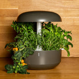 Indoor Smart Garden Plantui 6 Grey Wood