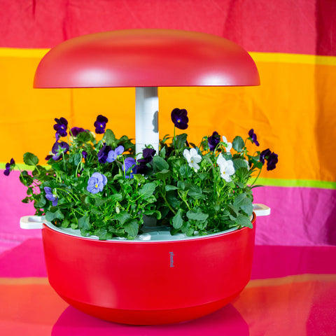 Plantui 6 Smart Garden Red Violas