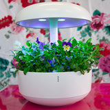 Plantui 6 Smart Garden White Flowers