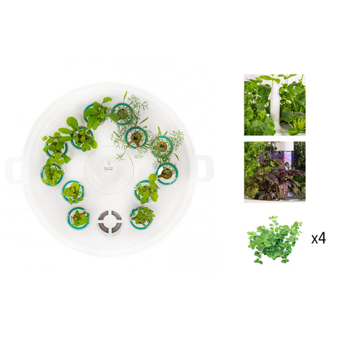 Plantui Booster Tray Bundle Spring