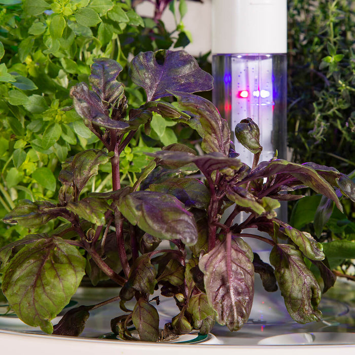 Plantui Boosting Light Basil Smart Garden