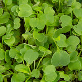 Plantui MICROGREEN Salad Rocket Main