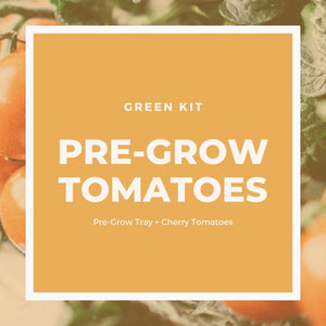 Pre-Grow Tomatoes