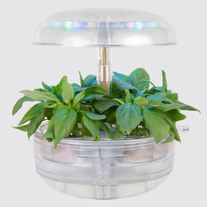 Plantui Smart Garden 6 Transparent