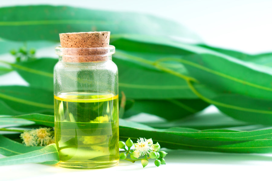Eucalyptus is essential oil for hair loss treatment