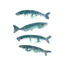 Four Mackerel Print