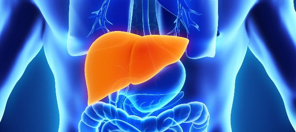 Reversing Fatty Liver Disease