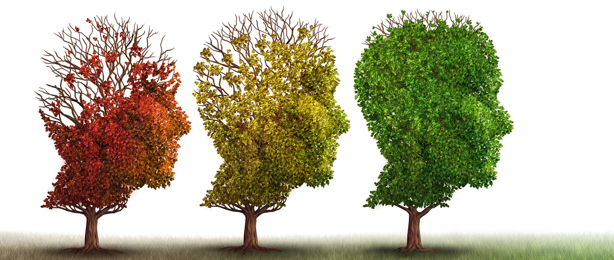 Improve Your Memory and Fend Off Alzheimer's