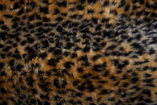 Los Angeles City Council Is Considering a Fur Ban!