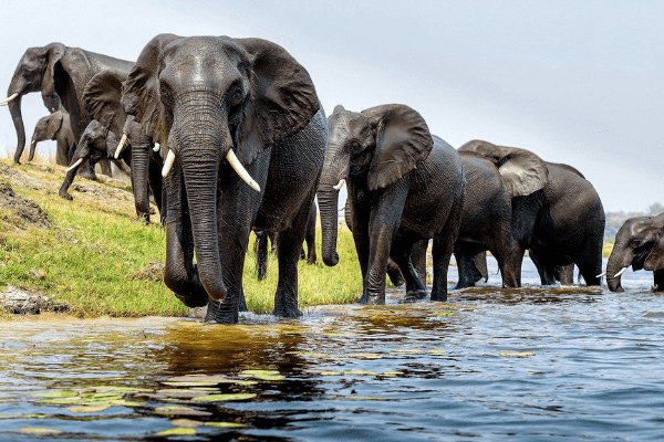 90 Elephants Were Just Killed in Botswana for Their Tusks