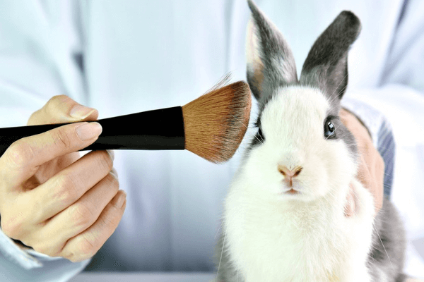 California Bans Cosmetic Testing on Animals
