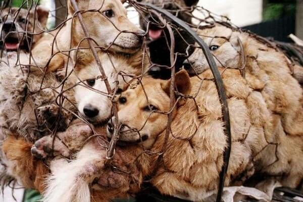 Dog Meat Outlawed In South Korea