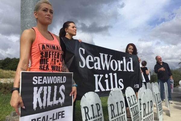 SeaWorld: A Place Of Pain And Sadness