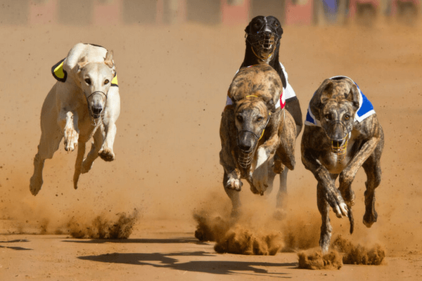Greyhound Racing Officially Banned In Australia's Captial City