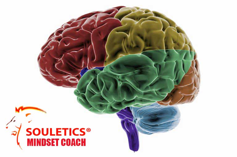 Mindset coaching: image of a multi colored brain with the Souletics logo(picture of lion)