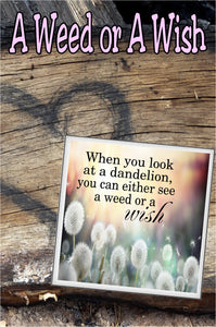 """When you look at a Dandelion, you can either see a weed or a wish."""