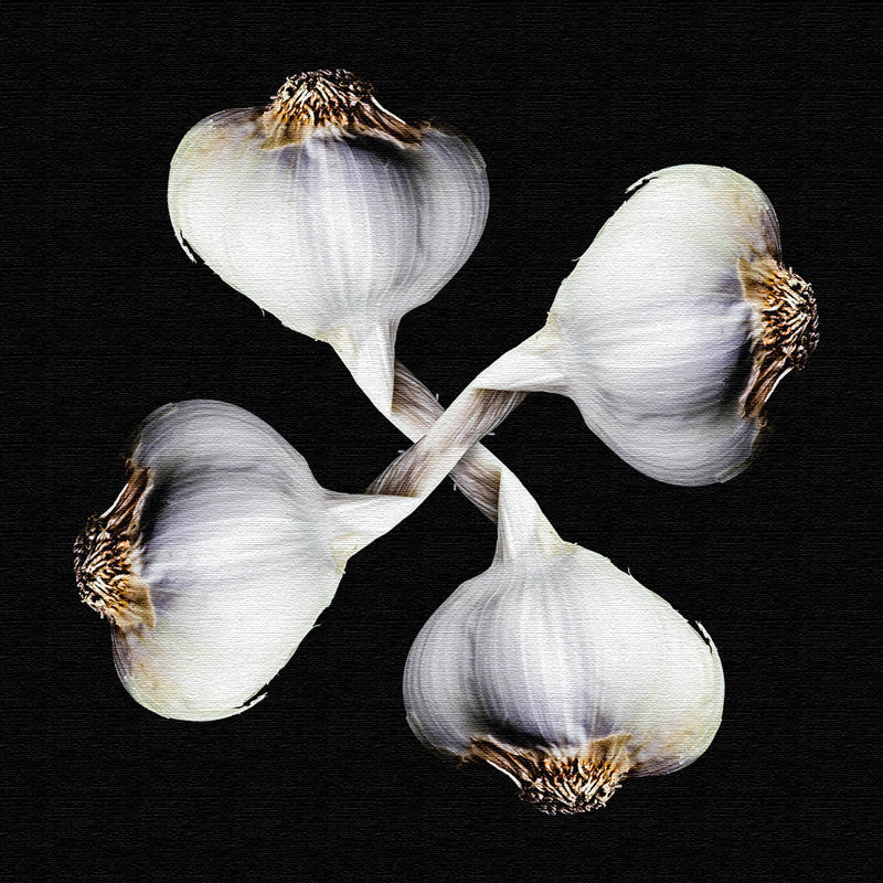 Garlic Canvas Print