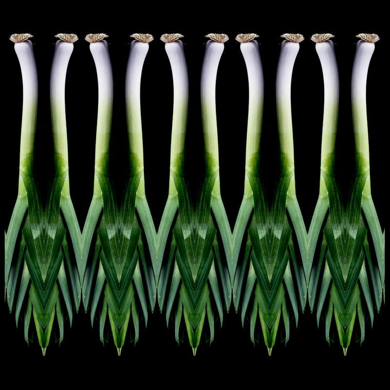 Scallions Canvas Print