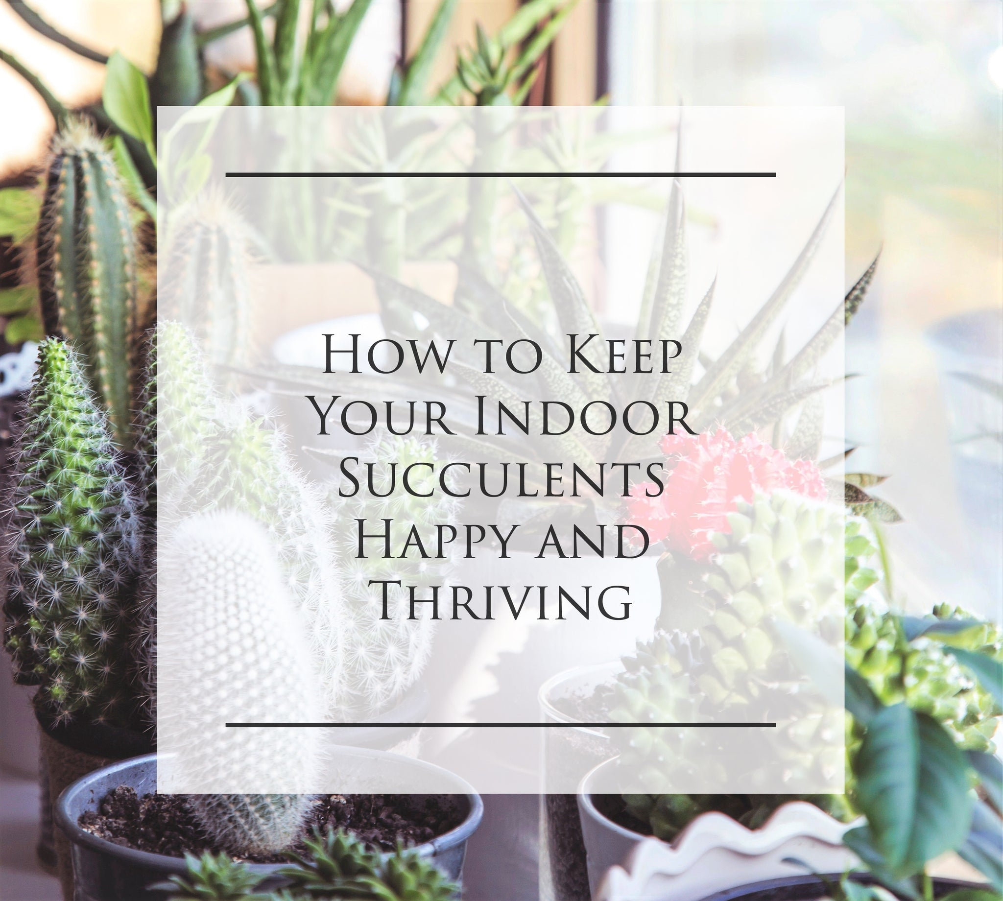 How to Keep Your Indoor Succulents Happy and Thriving