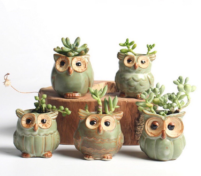 Ceramic owl planter set