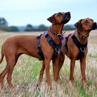 The 'Perfect Fit' Dog Harness