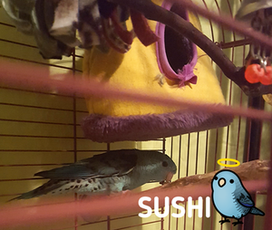 Shy Sushi has Passed Away