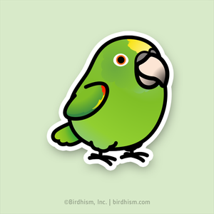 BACK ORDERED: Chubby Yellow-crowned Amazon Stickers