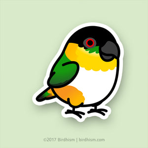 Chubby Black-headed Caique Stickers