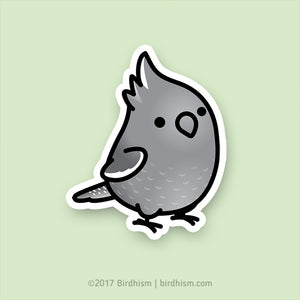 Chubby White-faced Female Cockatiel Stickers