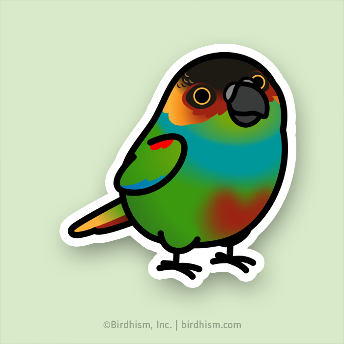 Chubby Blue-throated Conure Stickers