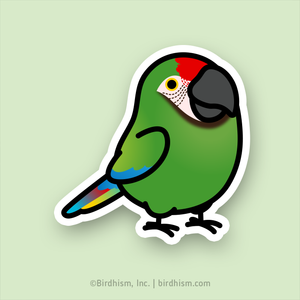 Chubby Military Macaw Stickers