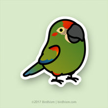 Chubby Red-fronted Macaw Stickers