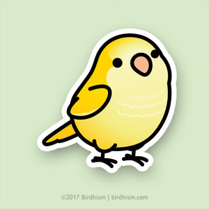 Chubby Yellow Lutino Quaker Parrot Stickers