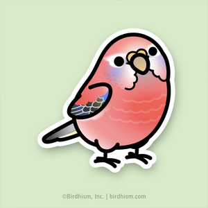 Chubby Rosey Bourke's Parakeet Stickers