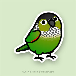 Chubby Black-capped Conure Stickers